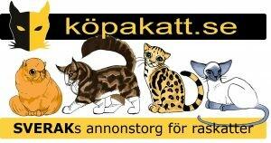 kopakatt-300x158